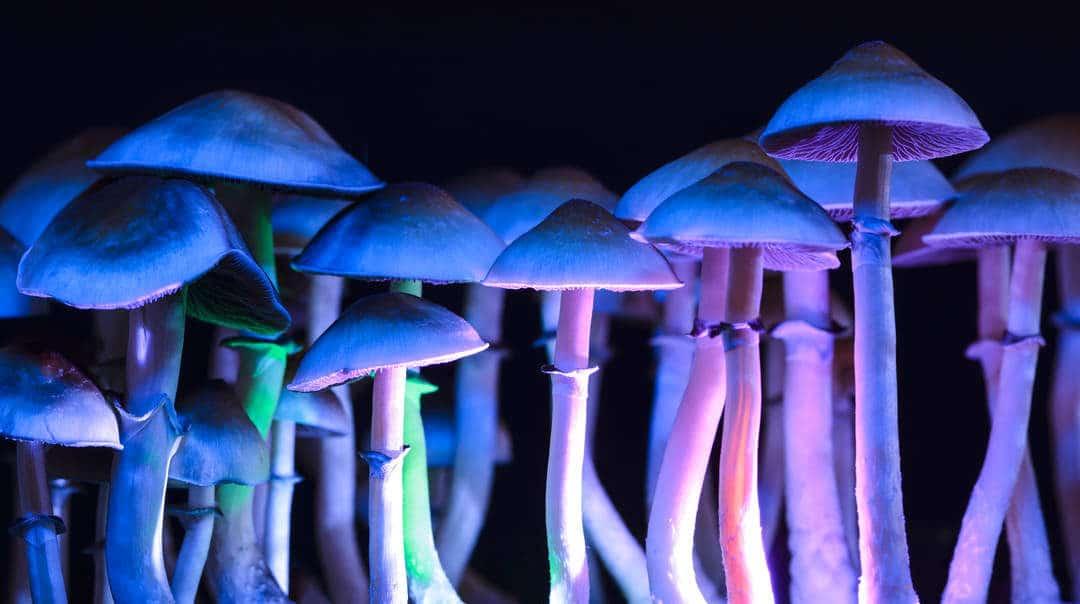 Les champignons hallucinogènes seraient 4 fois plus efficaces que les anti-dépresseurs
